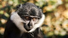 HD Monkey Wallpaper 25512