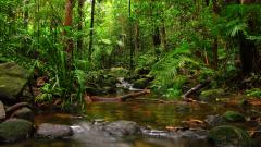 HD Rainforest Wallpaper 24473