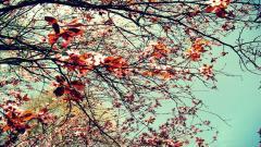 HD Vintage Wallpaper Tumblr 24516