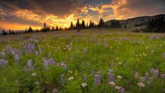 Meadow 29566