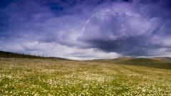 Meadow 29568