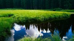 Meadow 29584
