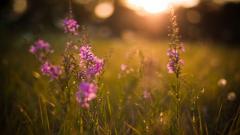 Meadow 29585