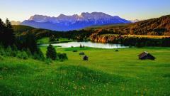 Meadow 29592