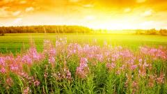 Meadow Background 29588