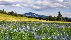 Meadow Photos 29596