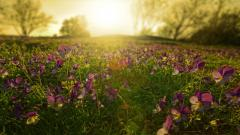 Meadow Wallpaper 29564
