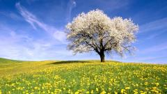 Meadow Wallpaper 29565