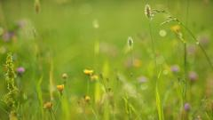 Meadow Wallpaper 29569