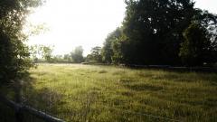 Meadow Wallpaper 29582