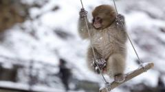 Monkey 25506