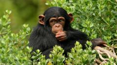 Monkey 25514