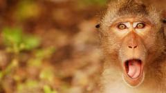 Monkey Background 25516