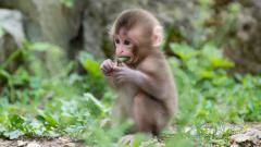 Monkey Wallpaper 25503