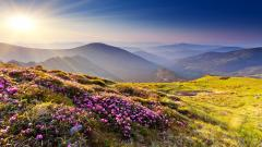 Mountain Meadow Wallpaper 33439