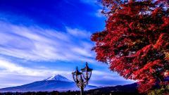 Mt Fuji 34458