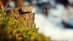 Nature Bokeh Wallpaper 41542