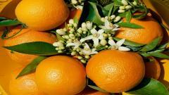Oranges 27809