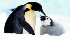 Penguin Wallpaper 13714