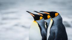 Penguin Wallpaper 13717