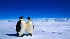 Penguin Wallpaper 13731
