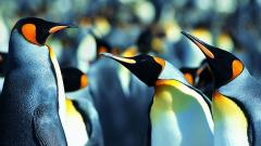 Penguin Wallpaper 13732