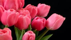 Pink Tulips 22699