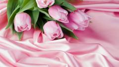 Pink Tulips Wallpaper 22695