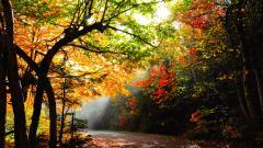 Pretty Forest Path 32583