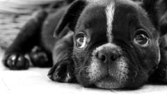 Puppy Face Wallpaper 39040