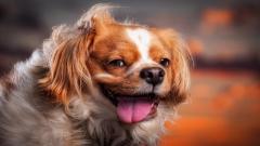 Puppy Face Wallpaper 39041