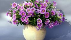 Purple Flowers Wallpaper 41916