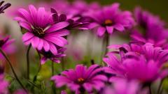 Purple Tropical Flowers 21682