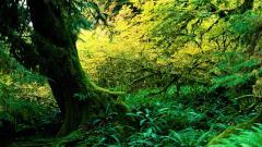 Rainforest 24480