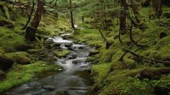 Rainforest 24492