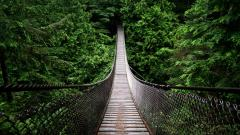 Rainforest Bridge Wallpaper 24477