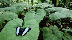 Rainforest Butterfly 24486