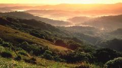 Rainforest Landscape 24481
