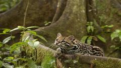 Rainforest Pictures 24488