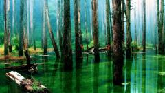 Rainforest Wallpaper 24471