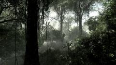 Rainforest Wallpaper 24475