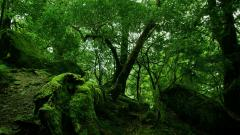Rainforest Wallpaper 24482