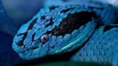 Rattlesnake 29842