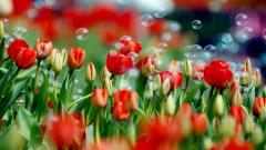 Red Flowers 33699