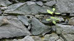 Rock Wall Wallpaper 41635