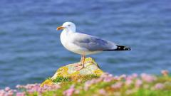 Seagull 30687