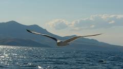 Seagull 30697