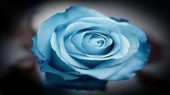 Serene Flower 33190
