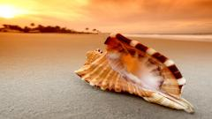 Shell Wallpaper HD 34309