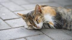 Sleeping Cat Background 40314